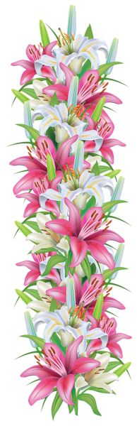 Pink and White Lilies Decoration Border PNG Clipart Image