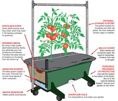 Science Behind the EarthBox - EarthBox - Homegrown Vegetables Without A Garden