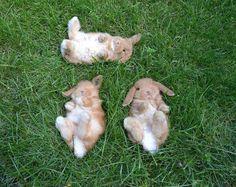 bunny hangout