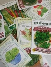 More on Seed Starting and Growing Transplants for the Garden - Backyard Wisdom