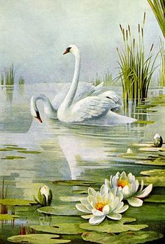 Pretty swan pair drawing from a vintage 1899 magazine. Two beautiful white birds glide majestically among white, yellow and orange water lilies. Art Et Nature, All Nature, Swan Painting, Painting & Drawing, Lotus Painting, Swan Drawing, Landscape Art, Landscape Paintings, Bird Drawings