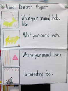 Animal research project anchor chart - for our farm unit before the pumpkin patch visit or around our trips to the aquarium and zoo!  collaborate with library teacher!