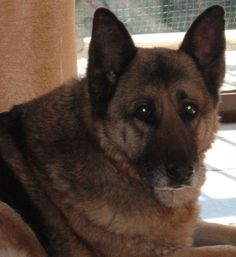 Η αυτοθυσία ενός σκύλου σε περίπτωση που αισθανθεί πως κινδυνεύουν οι άνθρωποι που αγαπά, δεν έχει όρια. Είναι διατεθειμένος να χάσει την ζωή του για να τους σώσει. Μια τέτοια περίπτωση περιγράφει η παρακάτω είδηση...
