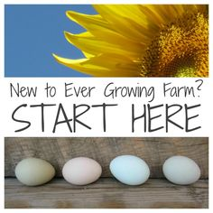 Backyard Chickens 101 - Questions to Ask Yourself Before Jumping In! - Ever Growing Farm | Ever Growing Farm
