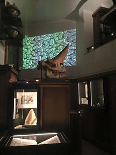 Visit to the Pop-Up exhibition at the Allard Pierson Museum. The room with the swordfish was definitely my favorite.