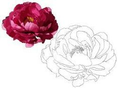 Discover recipes, home ideas, style inspiration and other ideas to try. Peony Drawing, Peony Painting, Floral Drawing, Abstract Flowers, Watercolor Flowers, Watercolor Paintings, Flower Line Drawings, Art Drawings, Peonies Wallpaper