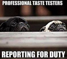 Funny Pug Dog Meme Pun LOL ~ re-pinned by pugpersonalchecks.com