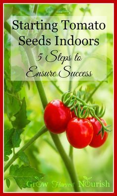 Starting tomato seeds indoors in the winter - it's easier than you think! Here are five great tips to help ensure your success!