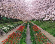 Spring Japanese Garden Wallpaper Design Awesome  Bedtime