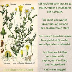 Die Kraft der Kamille - Karl Heinz Waggerl