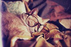 cat, sleep,