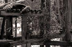 #charentemaritime #zoo #lapalmyre #panda