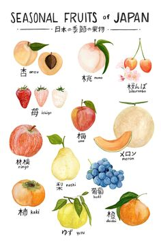 Seasonal Fruits of Japan Print of watercolor illustration A watercolor botanical illustration of twelve fruits, labeled in Japanese (with an English pronunciation) Art print of an original watercolor painting Basic Japanese Words, Japanese Phrases, Study Japanese, Japanese Culture, Japanese Food, Japanese Things, Learning Japanese, Japanese Language Lessons, Hiragana
