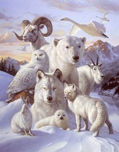 """Protégeons ces Innocentes Créatures issus de la même Source que nous autres """"Les Humains"""""""