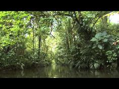 ▶ Costa Rica Pura Vida - Caribe Costarricense - YouTube