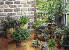 Unless light is plentiful, growth of most indoor herbs will slow or even stop during the winter, even with enough warmth. When growth slows, reduce harvests and hold back a little on the water. Reducing the indoor temperature to 60� to 65�F, if possible, also helps.