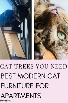 Searching for the best cat tree for apartment living? Check this guide full of quality natural wood and real tree branches. These are the wildest cat trees available today. Choose from cat tree wall mounts or cat tree condos. I live in a small apartment so my cat furniture ideas will be great for you too! I've even included a cat DIY tree. Get the best cat tree ideas for apartments and small spaces here. Make your cat happy with these idea #cattree #catfurniture #catstuff #catsupplies… Cool Cat Trees, Diy Cat Tree, Cat Tree Condo, Cool Cats, Modern Cat Furniture, Furniture Ideas, Furniture Design, Dog Died, Kitten Care