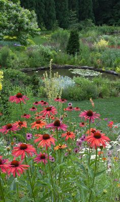 echinacea  'evan saul' Chanticleer Garden. Photo by Lisa Roper