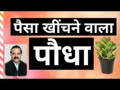 वास्तु शास्त्र में पैसा खींचने वाला पौधा   Vastu Shastra Plant to Attract Wealth/Money   Ummed Dugar - YouTube Camphor Uses, Latest Books, Company Logo, Logos, Youtube, Logo, A Logo