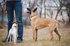 """Una delle espressioni più comuni che è facile ascoltare tra i proprietari di cani è """"gli manca solo la parola""""."""