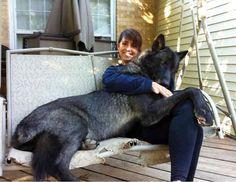 14 koiraa jotka eivät oikein ymmärrä omaa kokoaan. Numero 11 on aivan valtava!