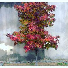Autumn / Winter Colors - tree in a city park - Lisbon Seasonal Fruits, Fall Winter, Autumn, Fruit In Season, Winter Colors, Park City, Lisbon, Seasons, Painting