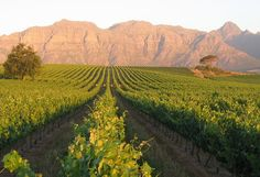 Our Favourite Places to Do Wine Tastings in and around Cape Town | Winery Tasting, Estates, Farms, Things to do in Stellenbosch South Africa