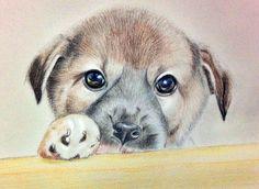 愛牠們就好好的用心照顧 希望大家多發揮「領養,不棄養」  讓動物們不用經歷生命倒數12日的殘酷 #art #illustration #color #painting #animal #dog