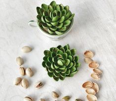 Pistachio Shell Succulent Craft - Created & Written by Sue at Reaching Happy Shell Flowers, Flower Pots, Succulent Pots, Succulents Diy, Crafts To Make, Crafts For Kids, Diy Crafts, Pista Shell Crafts, Pistachio Shells