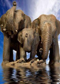 Three Elephants by Threepwood