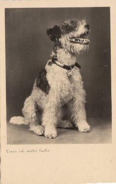 So you want a cute,demure little lap dog. You're 'avin' a laugh !