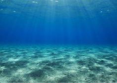 Mixótrofos, así es el plancton asesino que vive en nuestros océanos
