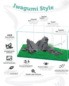 Iwagumi Aquascaping Style by TheAquariumGuide.com
