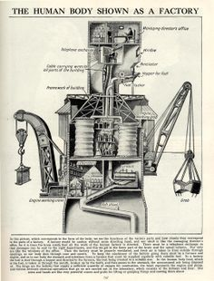 The Human Body as Factory. Wish I knew the source for this. It's really neat!  ...MKL...