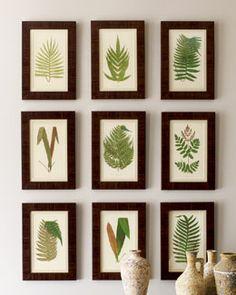 Framed Botanical Prints.