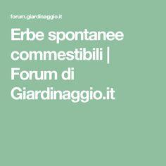 Erbe spontanee commestibili | Forum di Giardinaggio.it