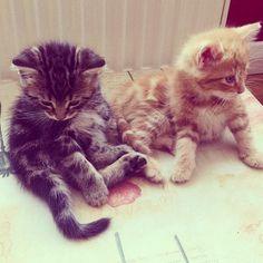 #Cats  #Cat  #Kittens  #Kitten  #Kitty  #Pets  #Pet  #Meow  #Moe  #CuteCats  #CuteCat #CuteKittens #CuteKitten #MeowMoe      Two cuties, I want both. ...   http://www.meowmoe.com/7570/