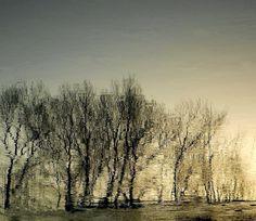 l'eau,la lumière,les arbres..... 2016