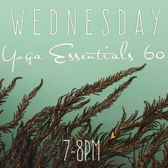 "20 Likes, 1 Comments - vehemence & emergence (@vehemenceandemergence) on Instagram: ""One hour of yoga suitable for all ages and abilities. Join us Wednesday night from 7 to 8pm. Visit…"""