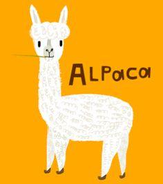 Kathleen Habbley alpaca illustration