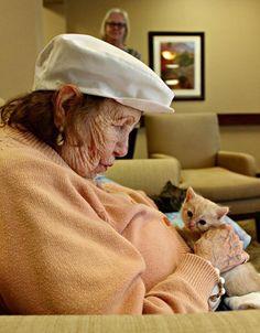 Internos de asilo cuidam de gatinhos órfãos resgatados