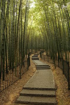 Paved and Gated Path through the Bamboo Forest in Hangzhou's Botanical Garden, China