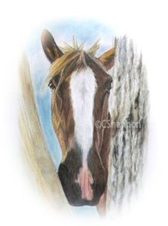 December ONLY. Great time to SAVE on having your dog, cat or horse drawn into a timeless keepsake portrait. - pass it on! Horse Portrait, Coloured Pencils, Horse Drawn, Pencil Art, Pet Portraits, Fur Babies, Hand Drawn, Your Dog, Cow