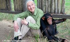 17 Incredible Things About Jane Goodall, Chimps and the Jungle-SHE'S AMAZING! I HAD THE GOOD FORTUNE TO MEET HER YEARS AGO!