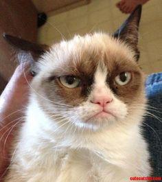 Cute grumpy the cat look - http://cutecatshq.com/cats/cute-grumpy-the-cat-look-2/