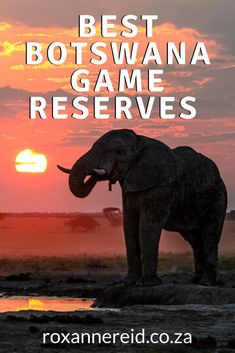 Planning your Botswana holidays? Find out about some of the best Botswana game reserves for a wildlife safari and why they are top Botswana tourist attractions. Think Okavango Delta and Moremi Game Reserve, Chobe National Park (including Savuti and Linyanti), Central Kalahari Game Reserve, Makgadikgadi National Park, Makgadikgadi Salt Pans, Nxai National Park and Kgalagadi Transfrontier Park Botswana. #ChobeBotswana - Roxanne Reid Chobe National Park, National Parks, All About Africa, Okavango Delta, Wildlife Safari, Slow Travel, Game Reserve, Africa Travel, Places To Go