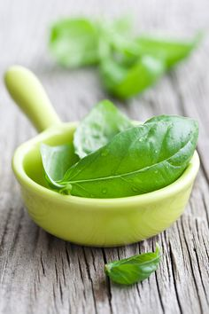 Basil, or Ocimum basilicum, has many varieties. The type used in Italian food is typically called sweet basil. It is used in cooking, to make pesto and for medicinal purposes. #Basil #Pesto #WeLoveHerbs
