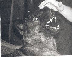 I used to have a crippling fear of dogs - i could sure go on about that Arte Obscura, She Wolf, Dog Teeth, Werewolf, Creepy, Beast, Grunge, Horror, Animal Kingdom