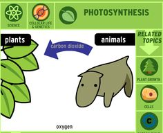 http://www.brainpop.com/science/cellularlifeandgenetics/photosynthesis/ BrainPop video on Photosyntheses