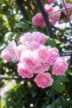 Rose Garden Tin tuc: http://tintuc.vn Tin tuc 24h: http://tintuc.vn/tin-tuc-24h Tin cong nghe: http://tintuc.vn/cong-nghe-so Tin nhanh chung khoan: http://tintuc.vn/tai-chinh-chung-khoan